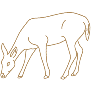 Drawing of a doe.