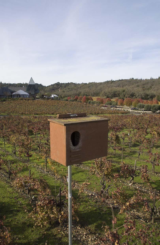 A Bat box in the vineyard.