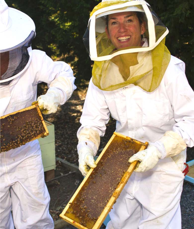 Two people harvesting a beehive.